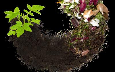 Le compost en bref