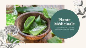 L'indispensable plante médicinale à mettre d'urgence dans son jardin
