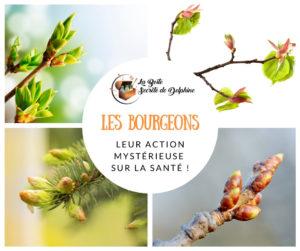 La mystérieuse action des bourgeons sur la santé